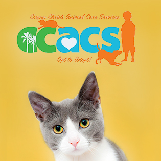Cat with CCACS logo